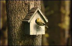 Vogel, Wohnung