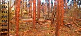 Waldbrand, Feuer