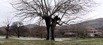 Baum Wasser Wurzeln