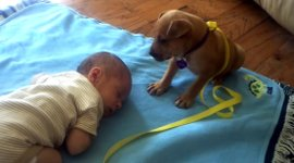 Baby Welpe Hund