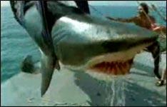 west, sharkattack