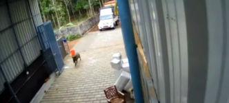 Wildschwein Büro