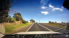 Wildwechsel Australien Kängurus
