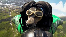 Wingsuit BASE Jumping Hund
