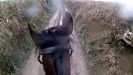 Shamrock Retired race horse