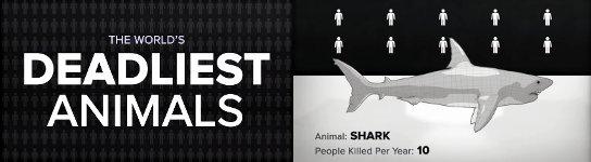 weltweit tödlichste Tier